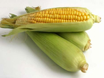 Превью 1267217446_sweet-corn (470x350, 60Kb)