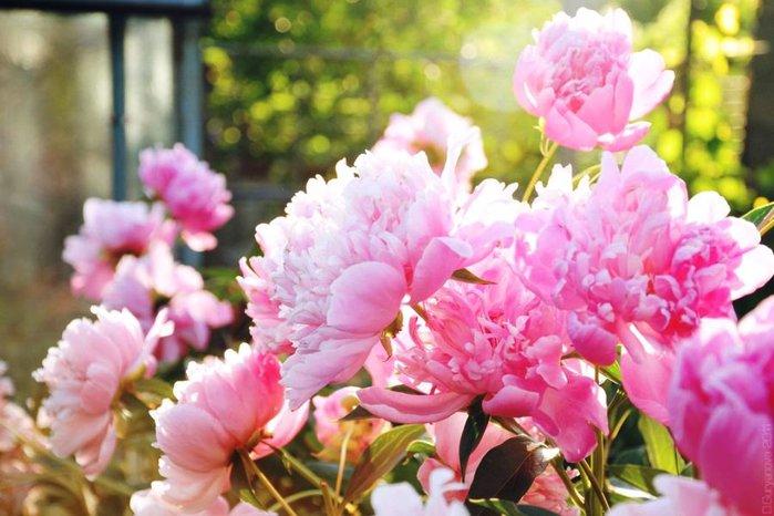 взгляд такой весна и пионы фото пропустите фигуры