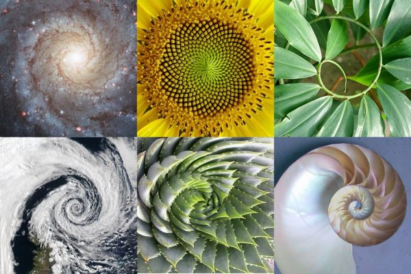 The-Golden-Ratio-600x400 (600x400, 69Kb)