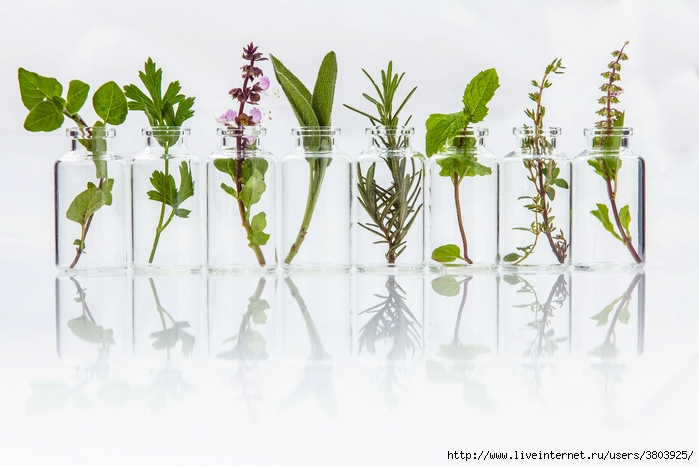 Травы для женского здоровья: какие и чем полезны рекомендации