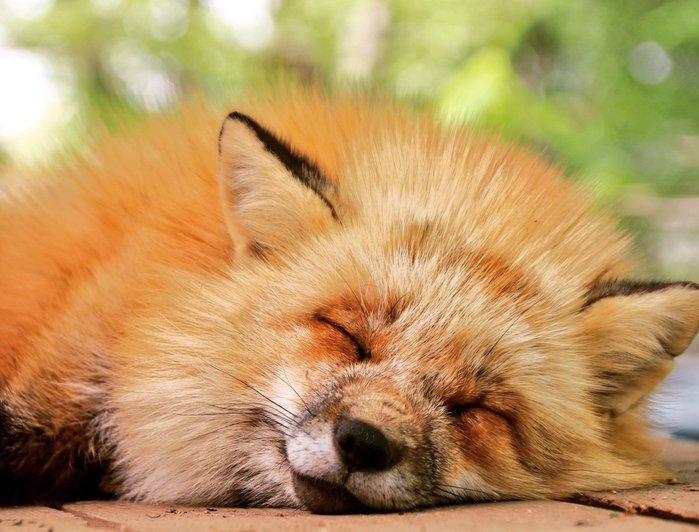картинки с лисицами доброе утро доска, позволившая