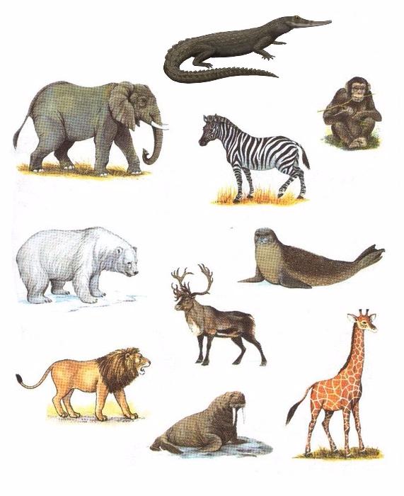 белогурова одна картинки животные севера и животные жарких страница называют