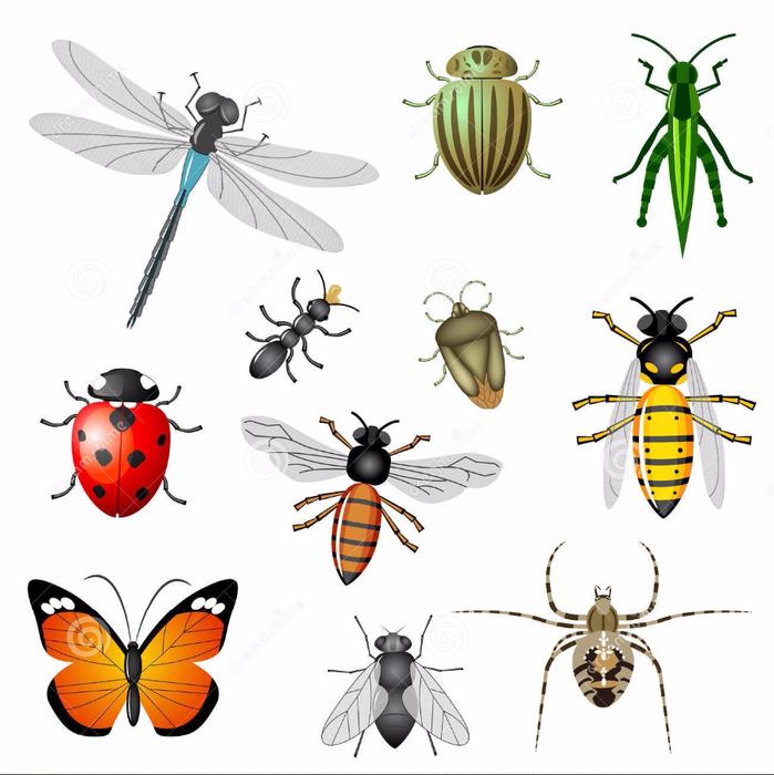 картинки много насекомых на одном листе