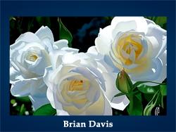Brian Davis (200x150, 62Kb)/5107871_Brian_Davis_kopiya (250x188, 78Kb)