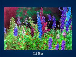Li Bo (200x150, 47Kb)/5107871_Li_Bo (250x188, 114Kb)