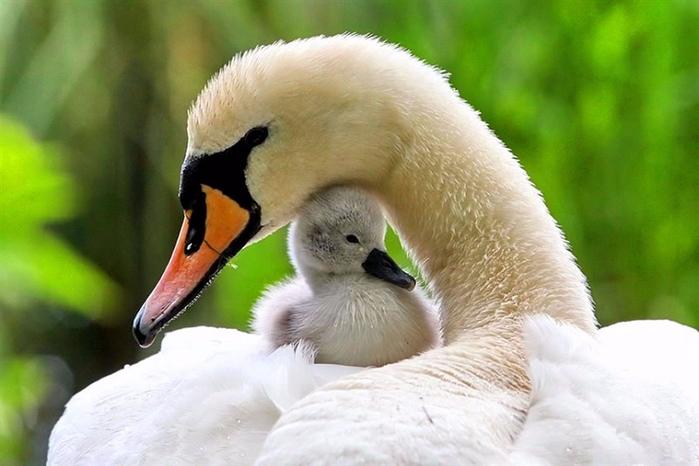 Картинки животных мам и детенышей