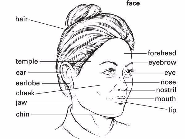 На английском картинки про лицо