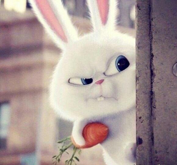 Котяры картинки, смешные картинки с зайцами доброе утро