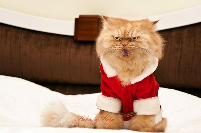 самый сердитый кот в мире