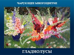 5107871_GLADIOLYSI (250x188, 104Kb)