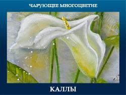 5107871_KALLI (250x188, 84Kb)