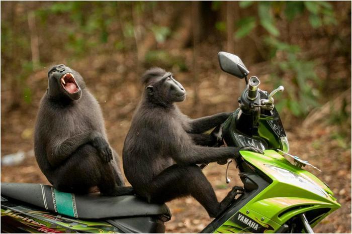 Необычный конкурс Comedy Wildlife Photography Awards 2017