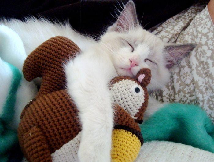 Кот с мягкой игрушкой скачать