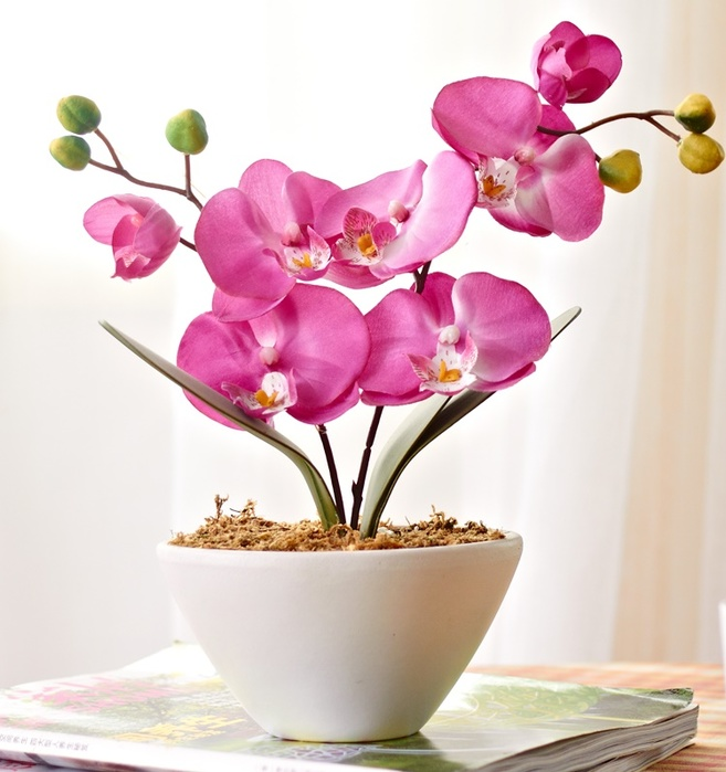 4920201_Orhideifalenopsis50shtSemenakrasiviiSadBonsaibalkoncvetokbabochkisemenaorhidei (657x700, 112Kb)