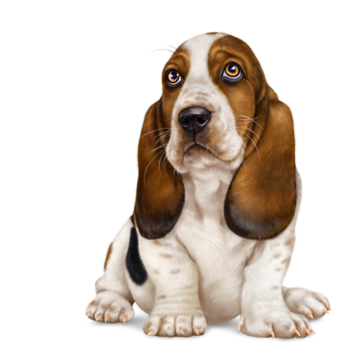 6314590_lonely_heart_basset_hound10 (700x700, 347Kb)