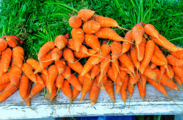 content_cultivation_of_carrots__econet_ru (700x460, 649Kb)