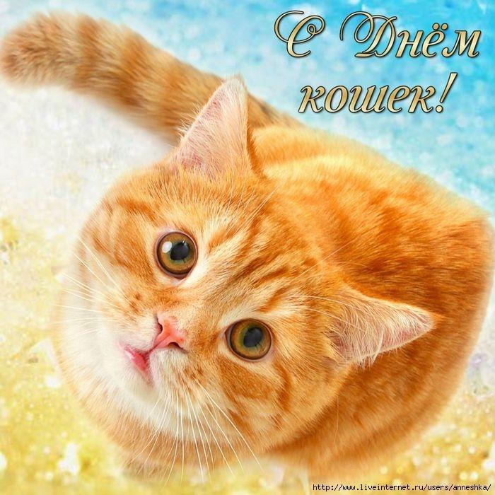 Картинки по запросу картинки с днем кошек ливинтернет