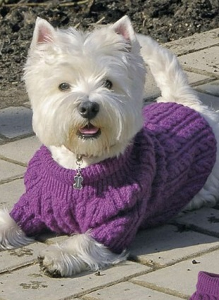 свитер для собаки спицами обсуждение на Liveinternet российский