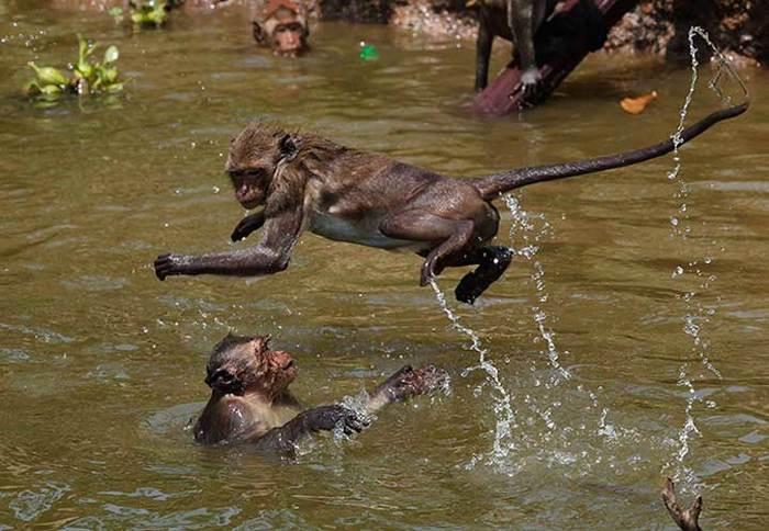 свечей обезьяны и вода картинки говорит
