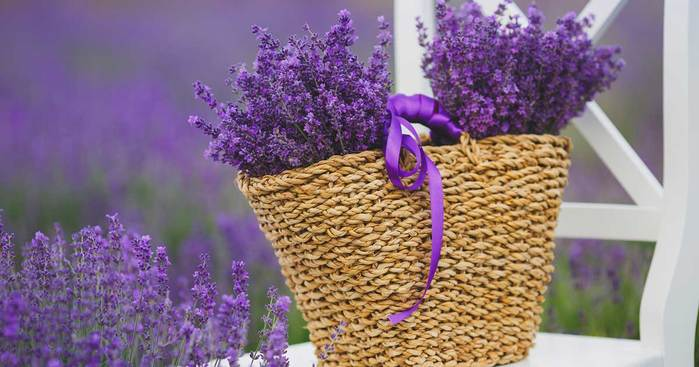 lavender-chair-flowers-03312016 (700x367, 45Kb)
