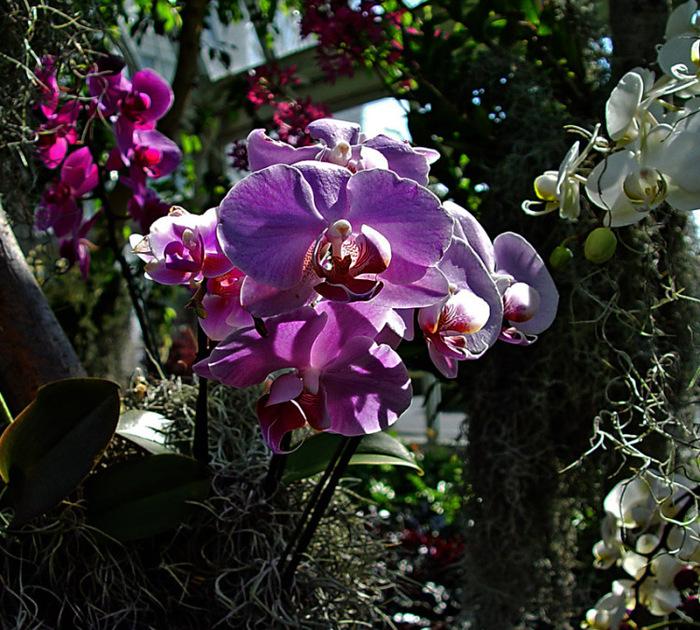 установка орхидеи в естественных условиях фото названную честь финского