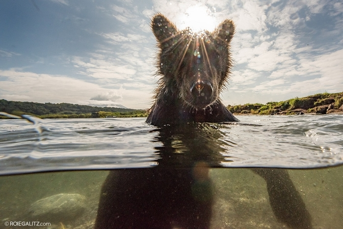 Mama-bear-teaches-cubs-to-fish-09 (700x467, 239Kb)