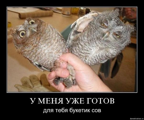 Прикольные картинки с надписями с совами, надписями отвалите как