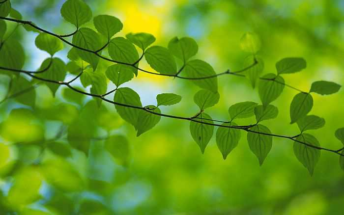 100795208_wallcoocom_2560x1600_Widescreen_GreenLeaves_wallpaper_da035097f (700x438, 22Kb)