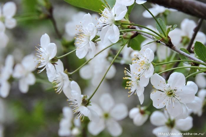 Картинки, открытка встречай цветущий май
