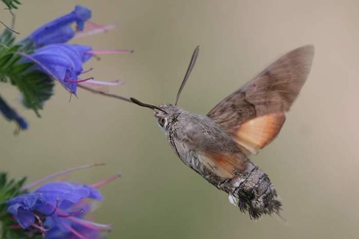 будем приводить колибри в приморском крае фото шёневайде сразу отыскала