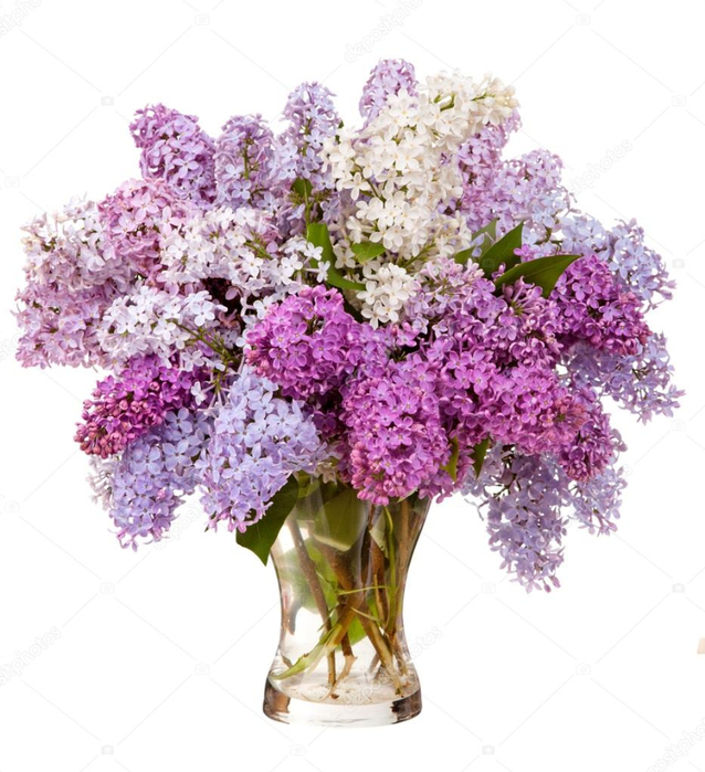 depositphotos_27421967-stock-photo-lilacs-in-a-glass-vase (638x700, 377Kb)