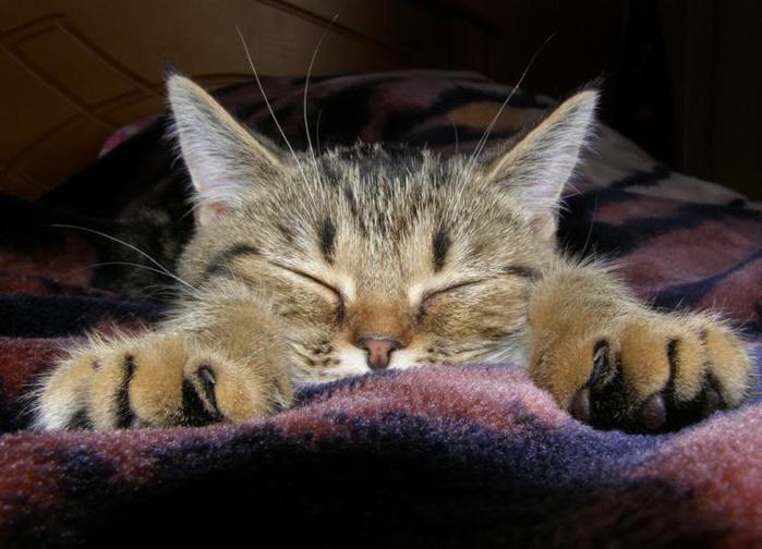 Открытки, котики смешные картинки с надписями хотят спать