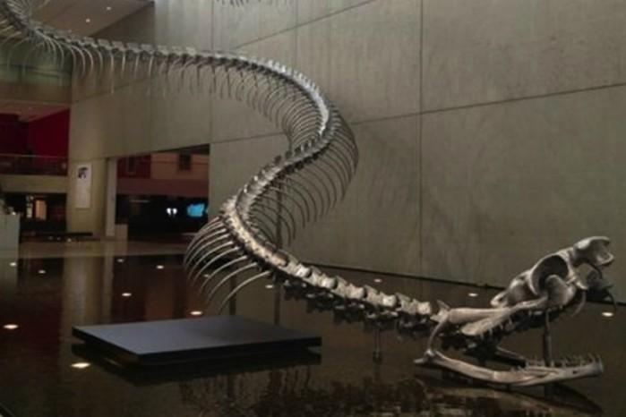 Титанобоа: гигантская змея, которая в древности нападала на слонов