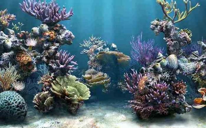 Рекордные колонии беспозвоночных животных