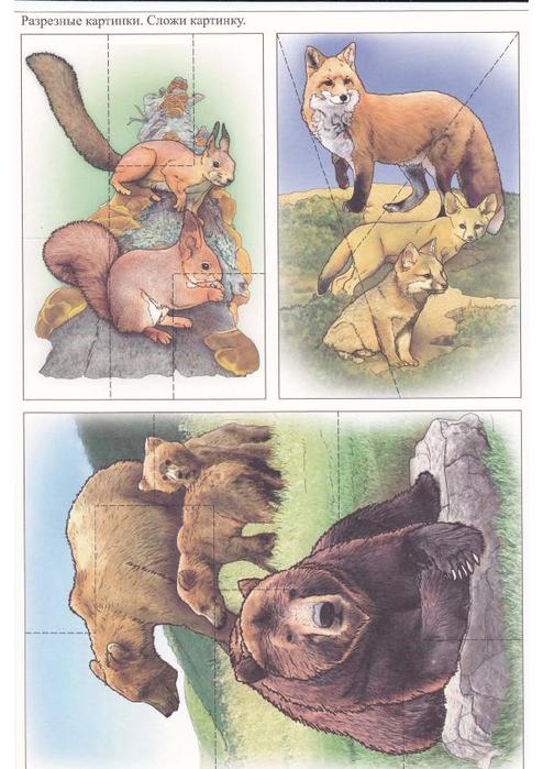 Дикие животные разрезные картинки