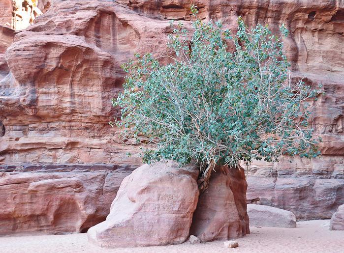 Съедобные дикорастущие растения фото с названиями хранения ухода