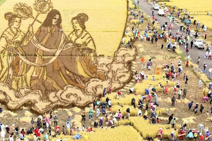 143323928 081218 1803 1 Картины на рисовых полях в Японии: оригинальный способ привлечения туристов