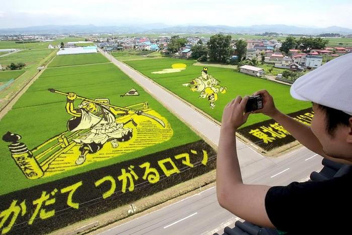 143323930 081218 1803 3 Картины на рисовых полях в Японии: оригинальный способ привлечения туристов