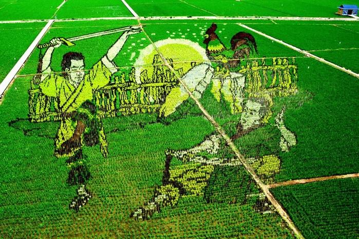 143323934 081218 1803 7 Картины на рисовых полях в Японии: оригинальный способ привлечения туристов