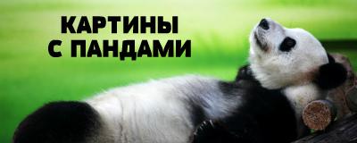 алмазная вышивка панды