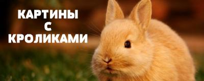 алмазная вышивка зайцы и кролики