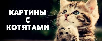 алмазная вышивка котята