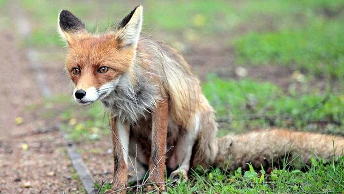 143496494 082818 0759 2 Как не стать жертвой бешеного животного и не умереть от укуса