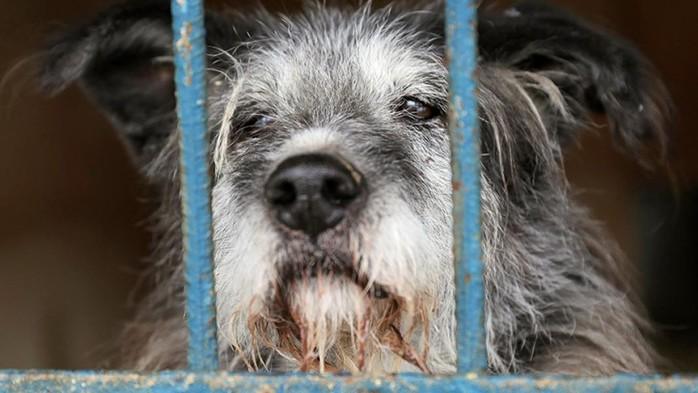 143496496 082818 0759 4 Как не стать жертвой бешеного животного и не умереть от укуса