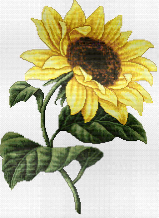 Sunflower (509x700, 475Kb)