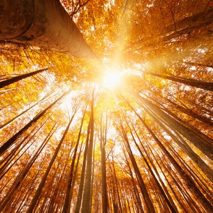 обеспечить высокое тонирование теплого осеннего фото с лучами солнца спокойная