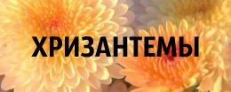 алмазная вышивка хризантемы