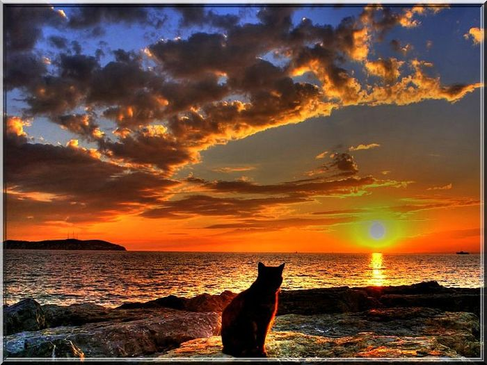 142616363_romantic_cat_sunset_animalskpb (700x525, 77Kb)