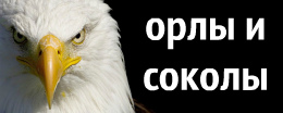 алмазная вышивка орлов и соколов