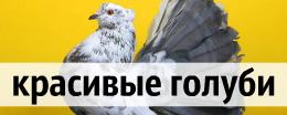 алмазная вышивка голубей